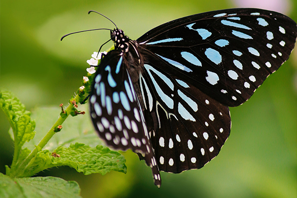 An image of a blue and black butterfly